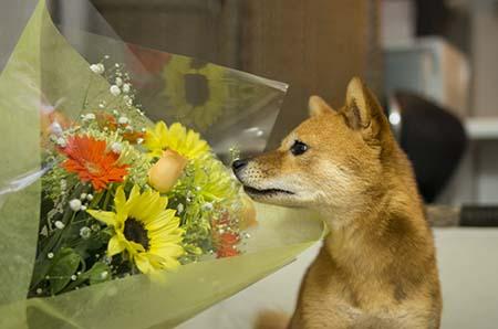 http://file.udon.sakeblog.net/IMGP0908.jpg
