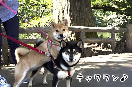 http://file.udon.sakeblog.net/49bc1a6d.jpeg