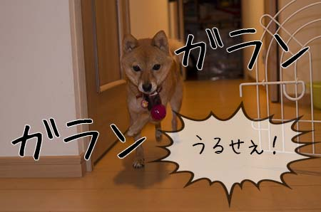 http://file.udon.sakeblog.net/IMGP1015.jpg