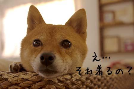 http://file.udon.sakeblog.net/IMGP0989.jpg