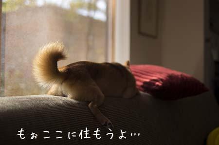 http://blog.cnobi.jp/v1/blog/user/5372066eaa7f42ee290a4176dda1b356/1444543511