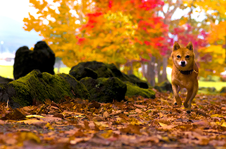 http://file.udon.sakeblog.net/IMGP1785.jpg