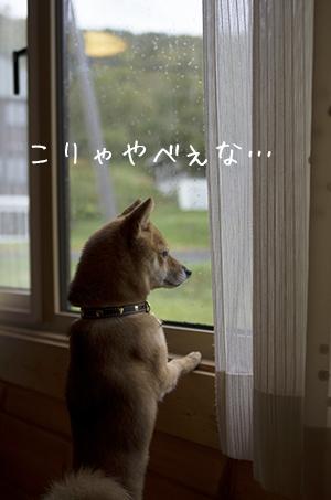 http://file.udon.sakeblog.net/IMGP1249.jpg