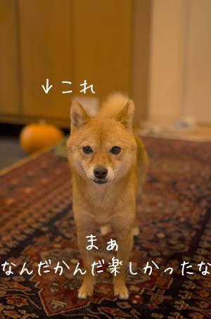 http://file.udon.sakeblog.net/297ef849.jpeg