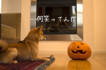 http://file.udon.sakeblog.net/IMGP1365.jpg