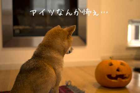 http://file.udon.sakeblog.net/IMGP1367.jpg