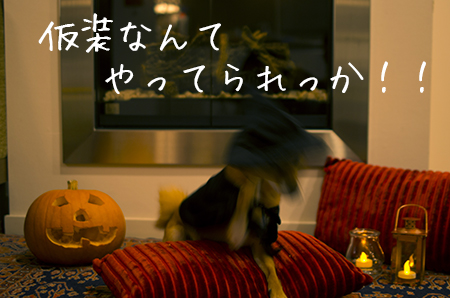 http://file.udon.sakeblog.net/IMGP1438.jpg