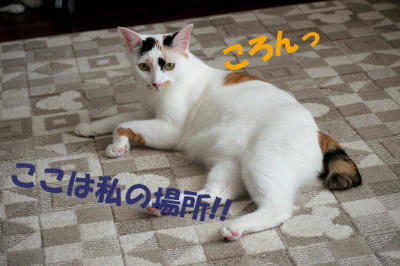 mugezo-0038.jpg