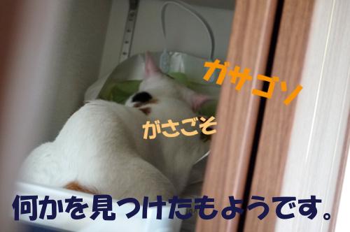 P1050606a.jpg