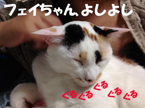 IMG_2263a.JPG