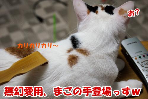P1070717.jpg