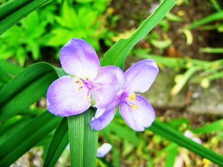 法華寺に咲く花