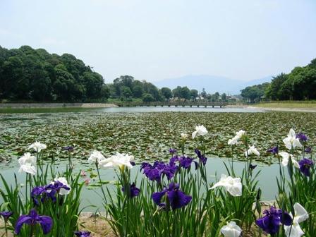 橿原神宮の深田池