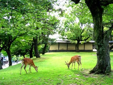 新緑の奈良公園