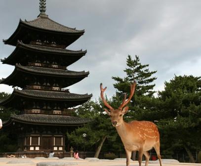 興福寺の五重塔と鹿