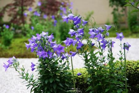 盧山寺の庭園
