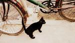 animal13b.jpg