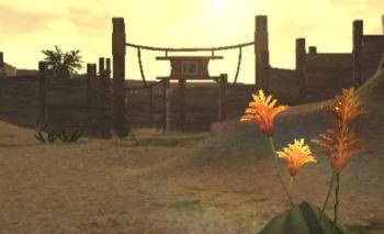 砂の地にオレンジの花が映えます