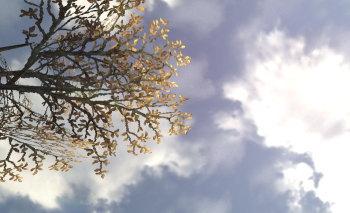 空と雲がきれいです