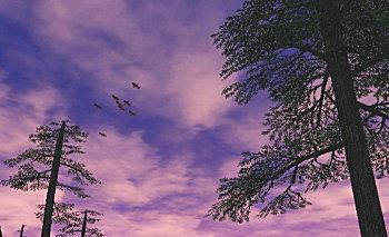ルフェーゼ野の空