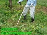 果樹の草刈