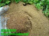 果樹を甘くする有機肥料の使用