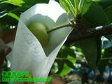 梨の袋がけ