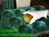 梨の選果写真