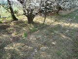 春の肥料2