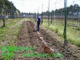 園芸肥料の使用