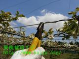 果樹棚のメンテナンス写真