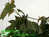 台風被害で折れた枝