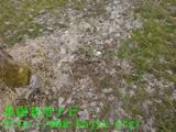 梨の落葉写真