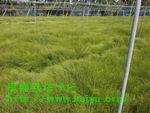 草が生えた休耕地