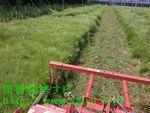 休耕地の草刈り