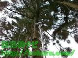 枝打ちはしごの使い方
