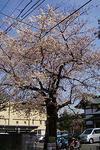 090403unokihachiman09.jpg