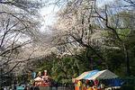 090403tamagawadaikouen25.jpg