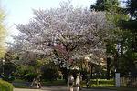 090410tokyo_n_museum12.jpg