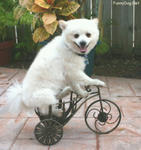 bicycle-dog.jpg