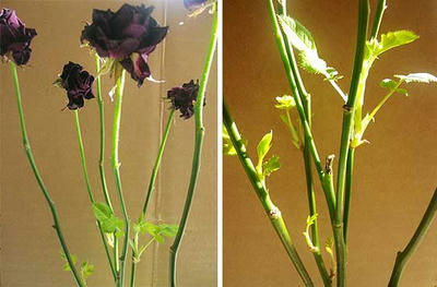 driedflower.jpg