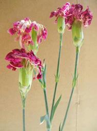 driedflower2.jpg