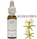 28.scleranthus