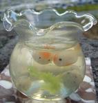 新作、金魚鉢
