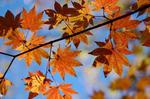 葉っぱがかわいい