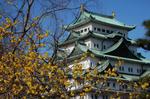 名古屋城と蝋梅