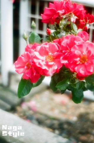 20100613_010.jpg