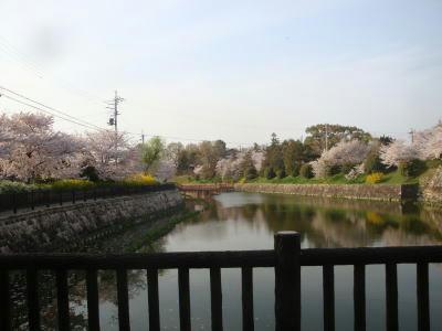 110411sakura3.jpg