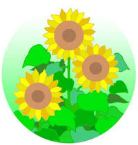 Sunflower ・ Flower ・ Plant of summer ・ Summer flower ・ Poetic event of Japan
