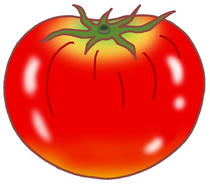 Tomato ・ Vegetable ・ Fruit tomato ・ Food